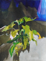 Xanthosoma 2012, Ink/Paper, 32x24cm -