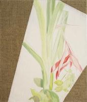 Rosa Billbergia, Oil/Canvas, 35x30cm -